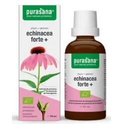 ECHINACEA FORTE (JEŻÓWKA PURPUROWA) KROPLE BIO 50 ml - PURASANA